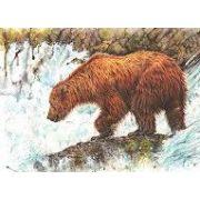 Derwent-inktense-muvesz-ceruza-medve